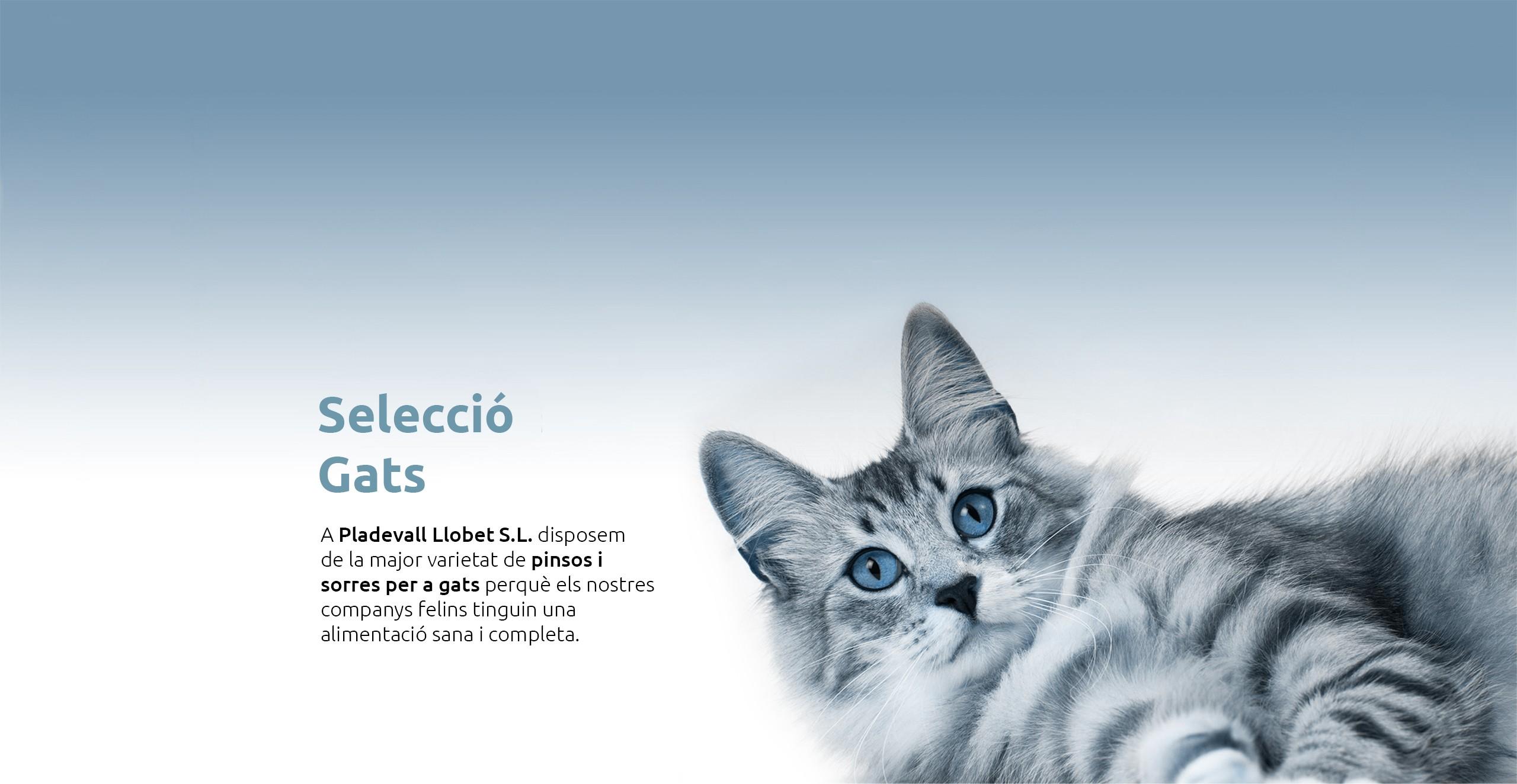Selecció gats